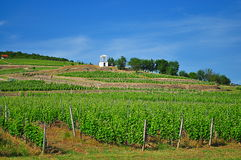Bâtiment d'établissement vinicole sur le gisement de raisin en Hongrie Images libres de droits