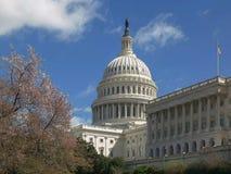 Bâtiment de capitol et cerisiers fleurissants dans DC de Washington images libres de droits