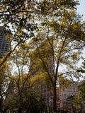 Bâtiment de fer à repasser derrière des arbres images libres de droits