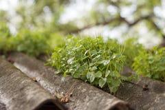 Bâtiment de vert de jardin de toit Images stock