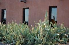 Bâtiment enduit d'adobe de stuc avec le cactus photos stock
