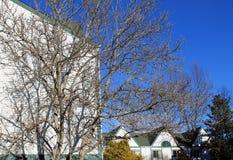 Bâtiment et arbre blancs contre le ciel bleu en hiver Image stock