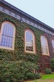 Bâtiment Ivied dans la cour de Harvard de l'Université d'Harvard Photo stock