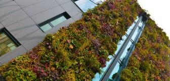 Bâtiment vert de mur dans la ville photo libre de droits