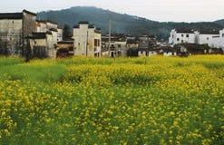 Bâtiments de Hui de Chinois dans le domaine de fleur jaune de viol Images stock