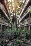 Bâtiments envahis par jungle Photographie stock libre de droits