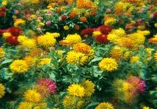 Bâtis de fleur Photographie stock