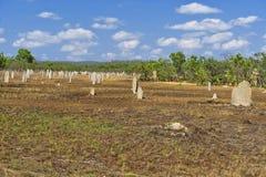 Bâtis de termite Photographie stock libre de droits