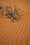 Bâton de nooky de Wavey Image libre de droits