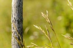 bâton en bois Images libres de droits