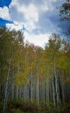 Bâtons blancs Photographie stock libre de droits