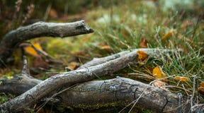 Bâtons de forêt photographie stock libre de droits