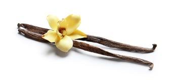 Bâtons et fleur de vanille photos stock