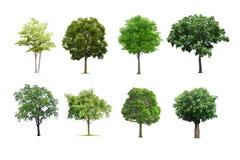 Bäume eingestellt lokalisiert auf weißem Hintergrund lizenzfreie stockbilder
