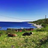 BÃ¥stad, Kattvik, Suède 2015 Photos stock