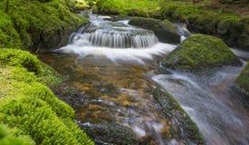 Bäck i skog Royaltyfria Foton