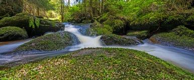 Bäck i skog Royaltyfri Fotografi