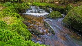 Bäck i skog Arkivbilder