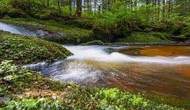 Bäck i skog Arkivfoton