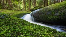 Bäck i skog Royaltyfri Foto
