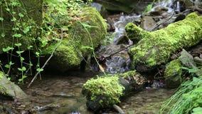 Bäck i skog med kallt vatten arkivfilmer