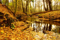 Bäck i skogen. Arkivfoto