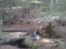 Bäck i skogen Arkivbild