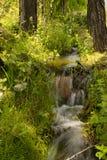 Bäck i skogen mellan träden arkivbilder