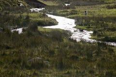 Bäck och fält i Yorkshire dalar Yorkshire England Royaltyfri Fotografi