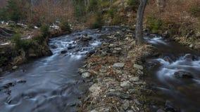 Bäckarna i skog Fotografering för Bildbyråer