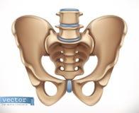 Bäckenstruktur Mänskligt skelett, medicin gears symbolen vektor illustrationer