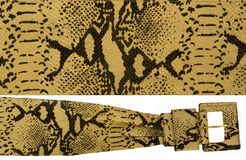 bältesnakeskin royaltyfri bild
