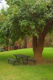 bänk över tree Arkivfoto