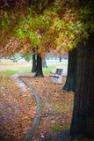 Bänk bland leavesna Royaltyfria Foton