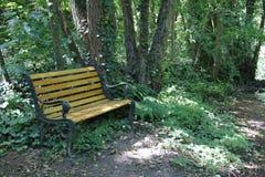 Bänk busksnår, undervegetation, med trä i ett mystikerträ royaltyfri bild