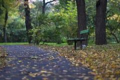 Bänk i en skog Fotografering för Bildbyråer