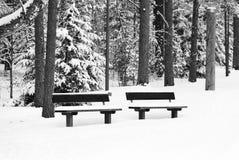 Bänk i en skog som täckas med snö royaltyfri fotografi
