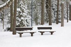 Bänk i en skog som täckas med snö royaltyfria foton