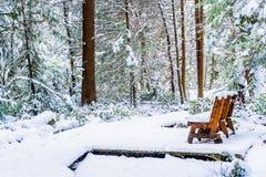 Bänk i en snöig skog, på en fotvandra slinga, efter en snöstorm i den Vancouver deltan F. KR., på brännskadamyren arkivfoto