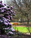Bänk i en trädgård med blommor Royaltyfri Fotografi