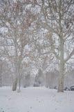 Bänk i parkera med snö Royaltyfria Bilder