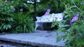 Bänk i trädgården för avkoppling Kamerarörelse av buskefältet av lilablommor, ger tillfället att se