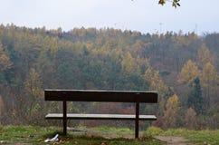 Bänk med en sikt av skogen Royaltyfri Fotografi