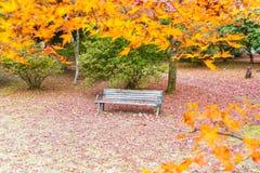 Bänk med röda lönnlöv som blommar på Arashiyama Royaltyfria Foton