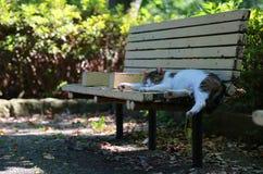 Bänk och katt av parkera Royaltyfri Foto