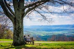 Bänk och träd, med sikt av den blåa Ridgen på Dickey Ridge Visi royaltyfria bilder