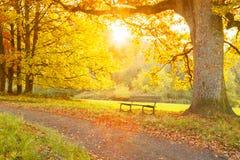 Bänk och träd på en bana i en parkera Royaltyfria Foton