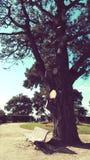 Bänk- och trädbakgrundstappning fotografering för bildbyråer