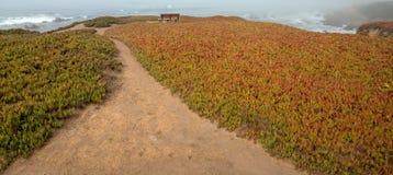 Bänk på bluff som omges av isväxten på rättfram slinga på den ojämna centrala Kalifornien kustlinjen på Cambria Kalifornien USA royaltyfri bild