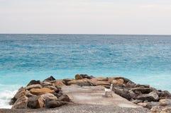 Bänk på en kust av sydliga Frankrike Royaltyfri Fotografi